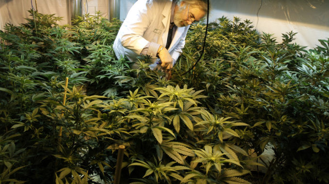 Monsanto and Bayer Are Moving To Create a Marijuana Monopoly