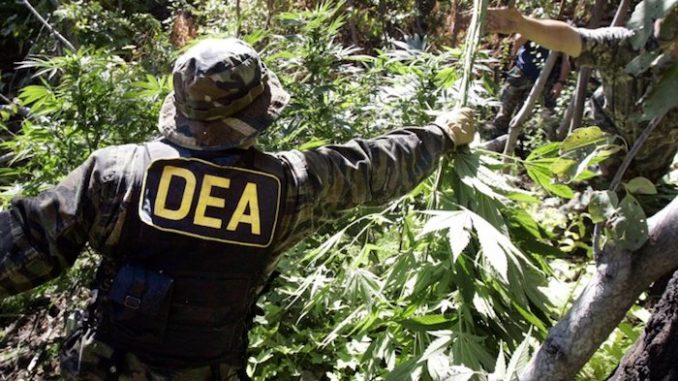 DEA: Nobody Has Ever Died from a Cannabis Overdose