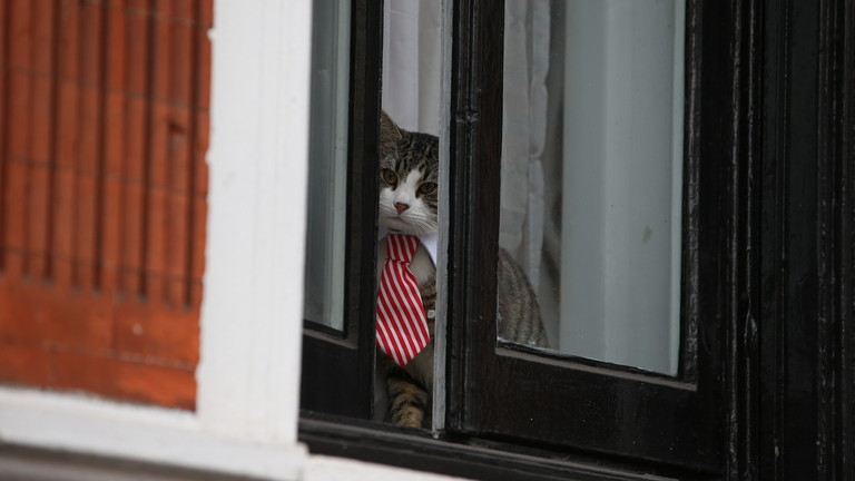 Assange's famous Embassy Cat might have been up to something dodgy – Ecuador's UK Ambassador