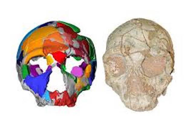Partial skull found in Greece is Europe's oldest human fossil
