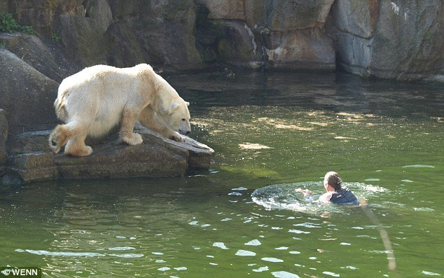 VIDEO: Woman Leaps Into A Polar Bear Enclosure At The Zoo And Gets Eliminated