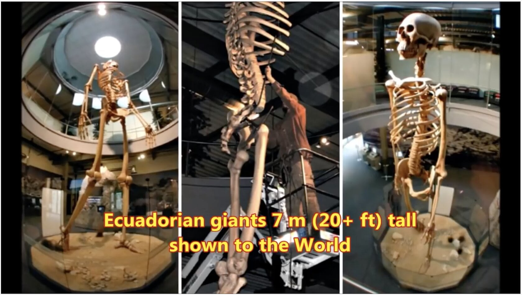 20+ Foot Tall Ancient Giant Skeletons On Exhibit for World to See ECUADOR GIANTS. | 2017