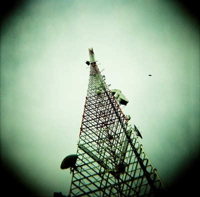 Communication towers killed about 6.8 million birds every year – that was as far back as 2012