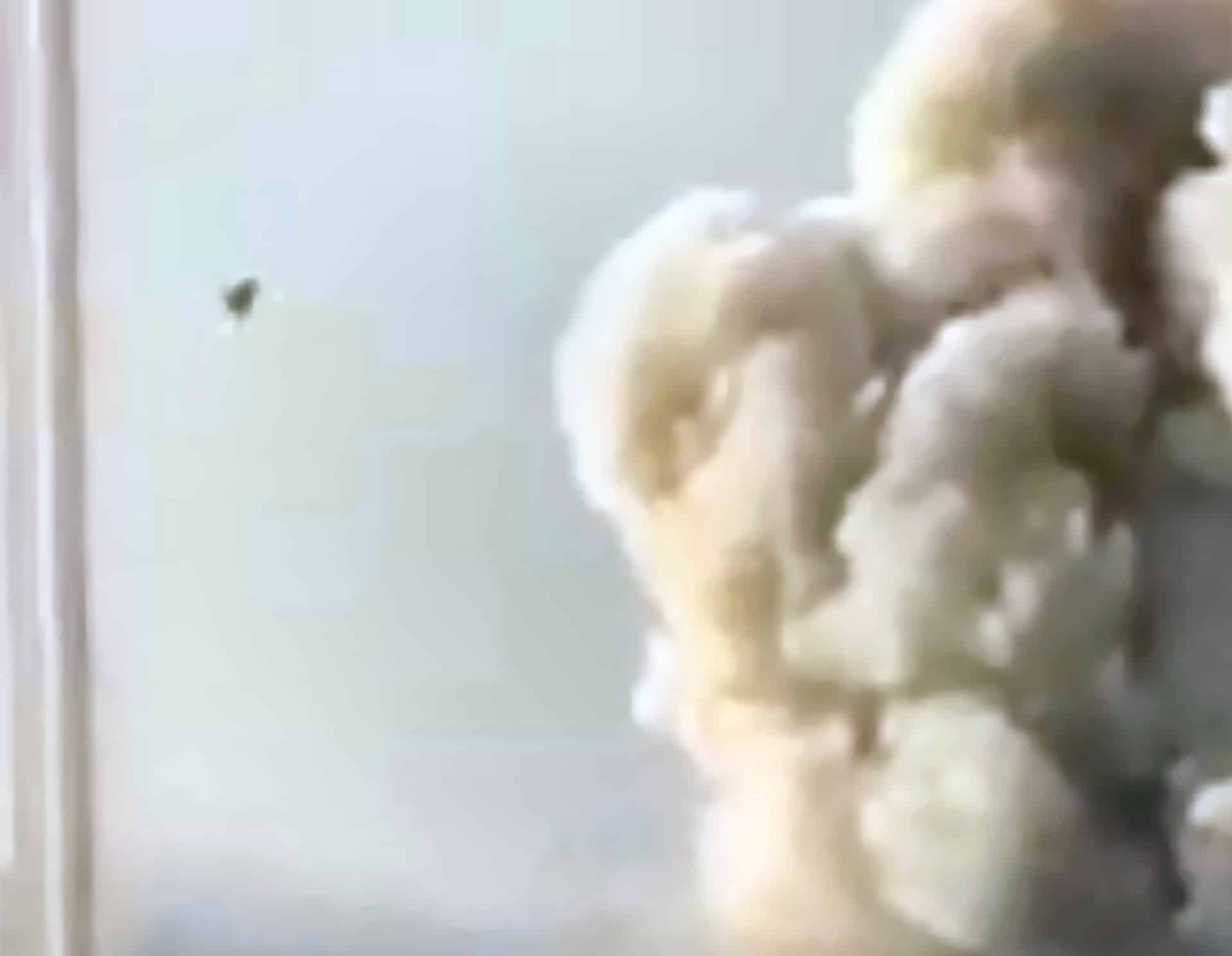 More video evidence of an Israeli F-16 attacking Beirut on the day of the explosion